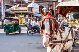 Ride horse cart at Sadar Market, India.