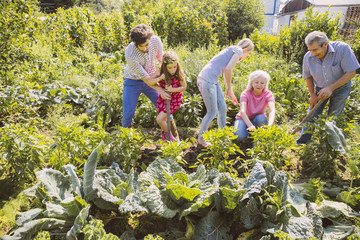 Im Gemüsegarten