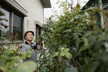 A man working in his garden.