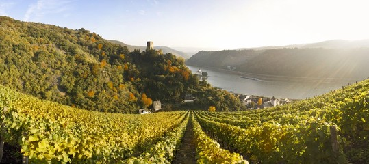 Deutschland, Rheinland-Pfalz, Kaub, Burg Gutenfels mit Weinbergen in den Vordergrund