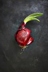Rote Zwiebel auf schwarzem Grund, erhöhte Ansicht