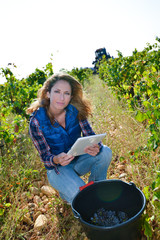 cheerful young woman oenologist checking grapes in vineyard