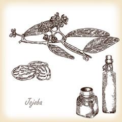 Jojoba branch with glass bottles. Hand drawn vector illustration