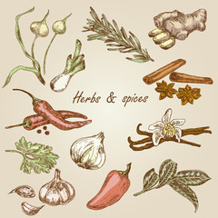 Kitchen gerb and spices color. Hand drawn vector illustration