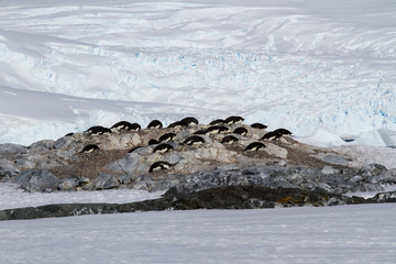 small colony of Adelie penguins among the rocks and snow on the