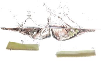 Cucumber undwerwater