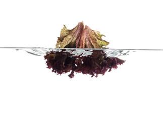 Red lettuce leaf
