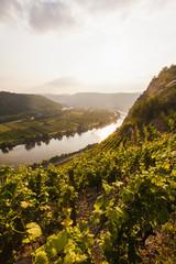 Deutschland, Rhein-Pfalz, Blick auf Mosel-Tal nahe Dieblich, Weinbergen an der Mosel Fluss