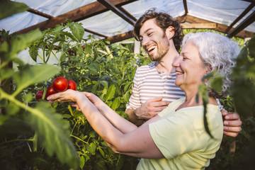 Mann und Frau bewundern reife Tomaten im Gewächshaus