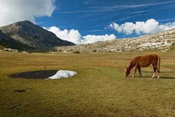 Lac de Nino- Chevaux sauvages-Corse