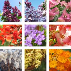 Neun Gartenblumen