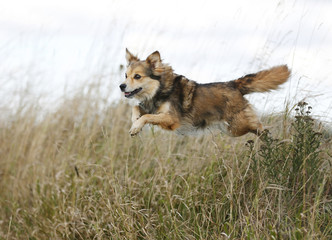Mischlingshund springt über einen Graben
