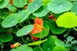 canvas print picture - Blumen