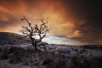 Großbritannien, Schottland, Isle of Skye, Baum im Winter
