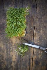 Gartenkresse und Schere auf Holztisch