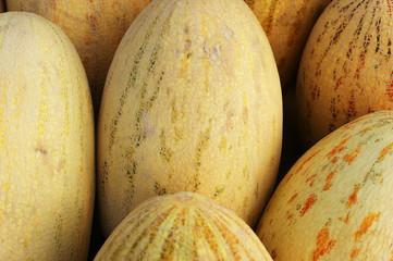 melon background, large yellow melon texture