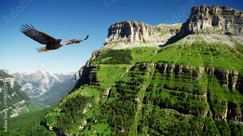 Tuinposter Canyon eagle