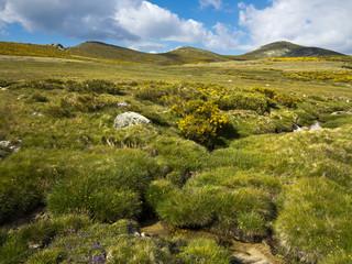 Los Cervunales. Sierra de Gredos.