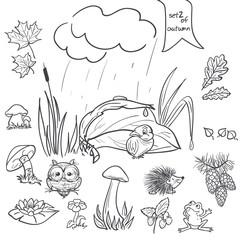 birds, animals, fungi, flowers, cones for the kids. Set 2.
