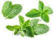 Fresh mint isolated on white. Collection - 70858253