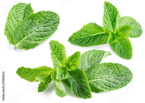 Deurstickers Kruiden Fresh mint isolated on white. Collection