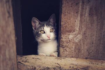 chaton dans grenier