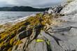Rugged Newfoundland Shore