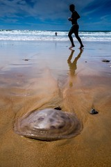 Jogger überholt Qualle am Strand