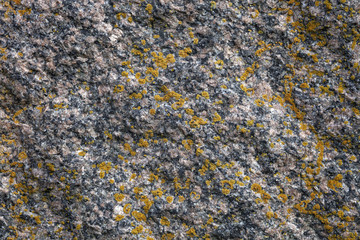 Flat granit stone with lichens