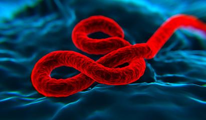 Ebola wirus 4