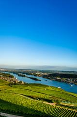 Weinbau am Rhein