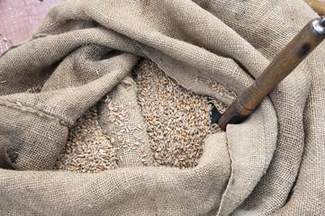 Schaufel im Getreide