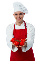 Male chef hands showing tomatoes