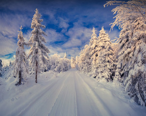 Colorful winter morning in the mountain forest