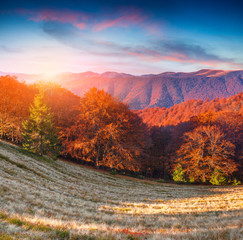 Colorful autumn sunrise in the mountains.