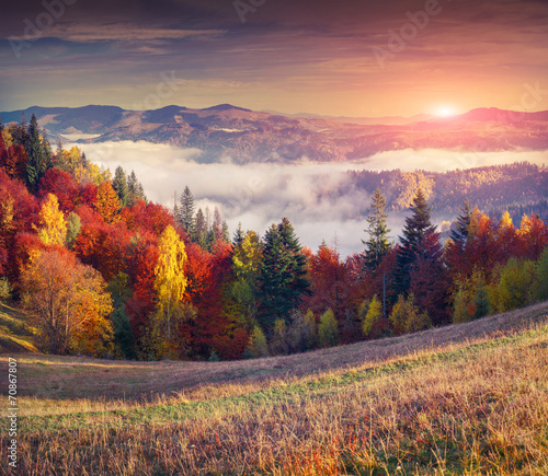Colorful autumn sunrise in the mountains. - 70867807