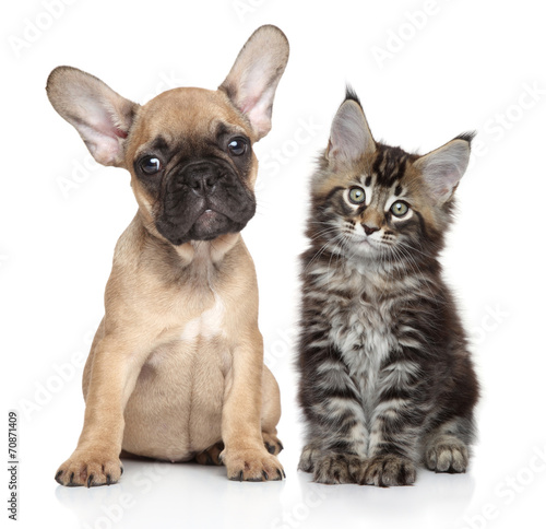 Puppy and kitten on white background - 70871409