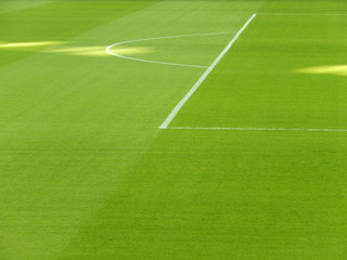 Bright green soccer field grass.