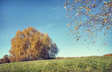 Beautiful autumn landscape in a sunny day (focus on the branch)
