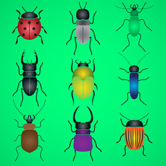 color bugs and beetles icons set eps10