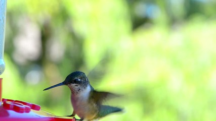 Hummingbird flying to the feeder close-up.