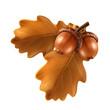 Oak branch with acorns, vector illustration