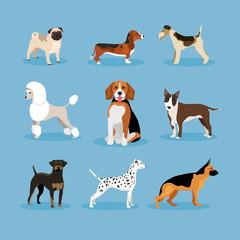 Dogs set