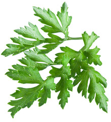 Green parsley isolated on a white.