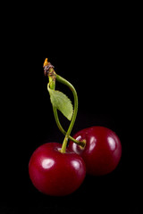 two fresh ruby cherries on black background