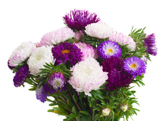 mix of aster flowers
