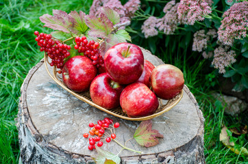 Red sweet apples in basket on the stump