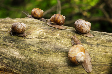 some snails on tree stem in forest