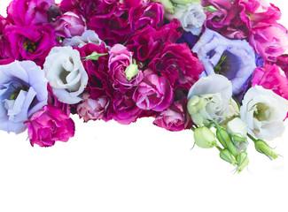 border of  violet eustoma flowers