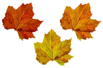 loving warm autumn colors